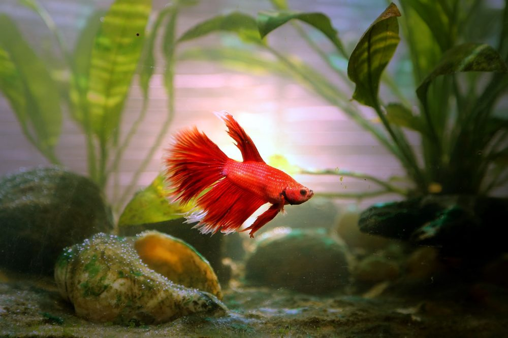 How often to change betta water